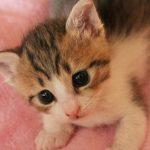 猫の年齢を人間に例えると何歳?