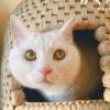 2/22の猫の日!岩合光昭さんの猫写真の切手セットが発売
