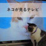 猫が見るテレビ「ネコがみるみるテレビ」放送