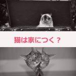 猫の常識「猫はなつかない」を覆す。猫の新事実