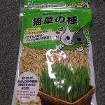 ダイソーの「猫草の種」をズボラが育ててみました