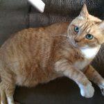 猫が膀胱炎になりました!原因は?病院代と治療内容「体験記」