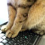猫と一緒に出勤!猫手当5,000円