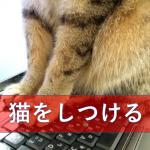 猫をしつける事はできるのか?