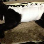 メス猫避妊手術後の様子、元気がなくて心配だけど大丈夫?体験記
