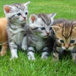 猫の避妊手術の必要性 時期や費用は?